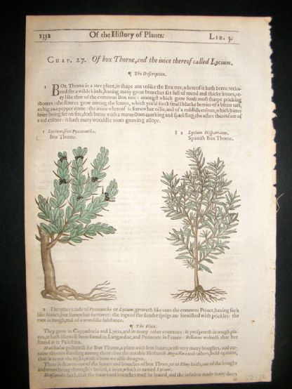 Gerards Herbal 1633 Hand Col Botanical Print. Lycium Boxthorn | Albion Prints